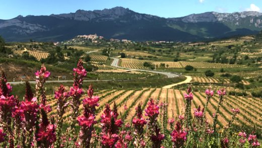 View of Rioja Vineyards