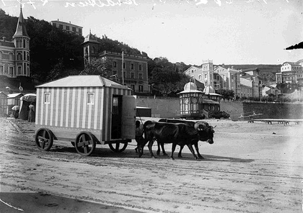 la concha beach changing carts pulled by oxen